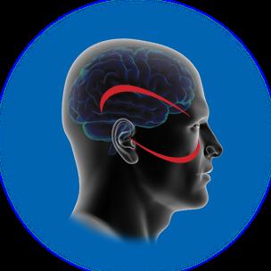 Vision and Sensory Integration Paddington